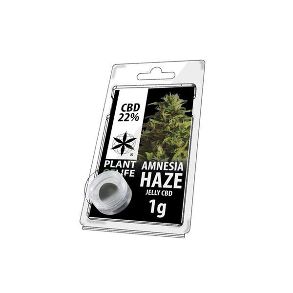 CBD 1g Jelly Amnesia Haze 22%